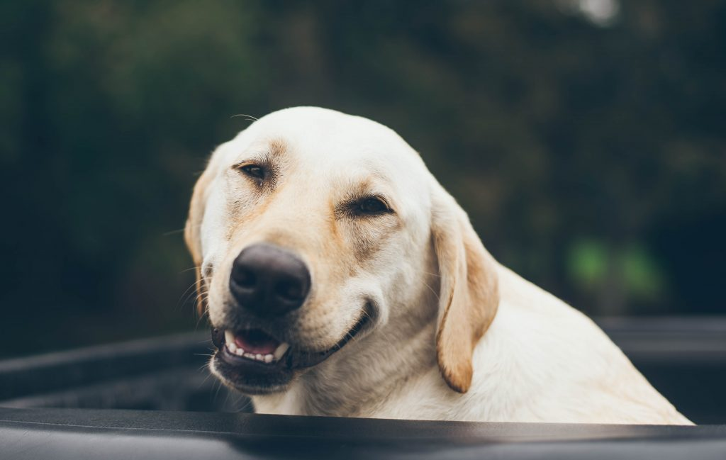 Funny, clever dog puns and jokes for dog lovers