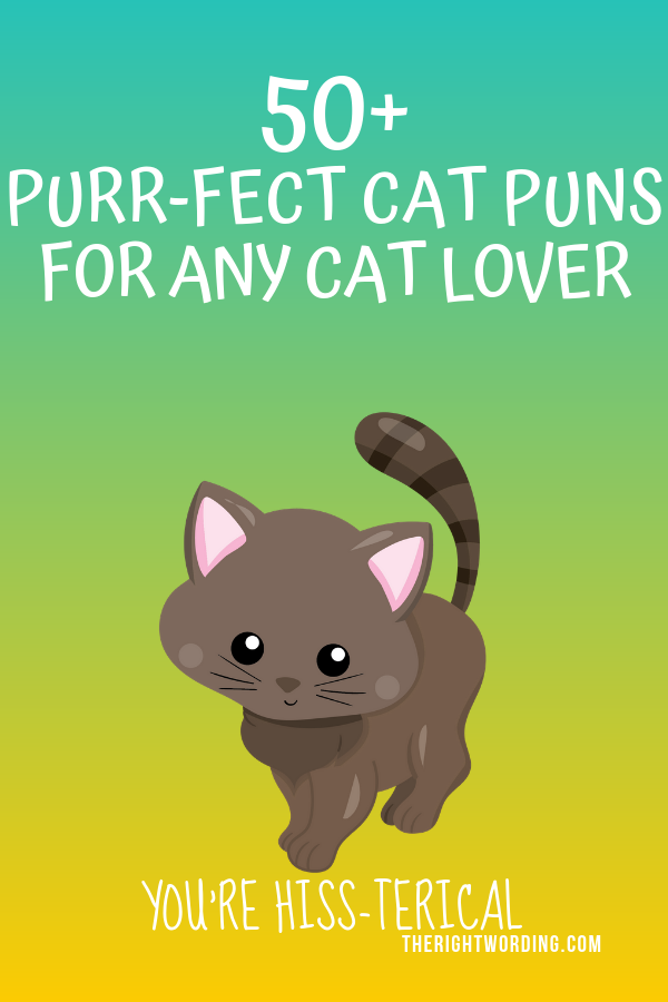 50 Hiss Terically Purr Fect Cat Puns For Any Cat Lover