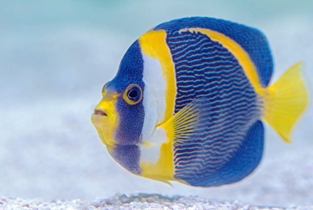 Fintastic Fish Puns That Don't Get Any Betta Than This